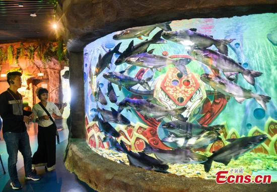 Aquarium featuring native fish species from Mekong River opens in Yunnan