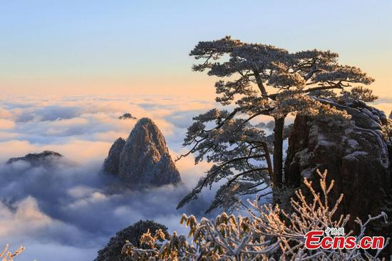 Landscape of rime-covered trees at the Huangshan Mountain scenic spot in Huangshan, January 12, 2020. (Photo: China News Service)