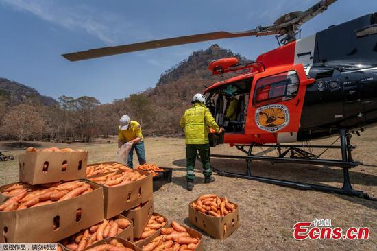 Tons of vegetables dropped in fire-ravaged bush for starving animals