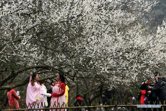 Plum flowers attract thousands of visitors in Libo, Guizhou