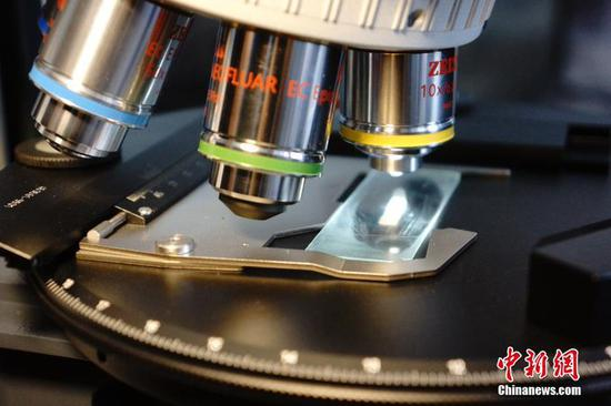 Chinese scientists identify mosquito protein related to virus transmission