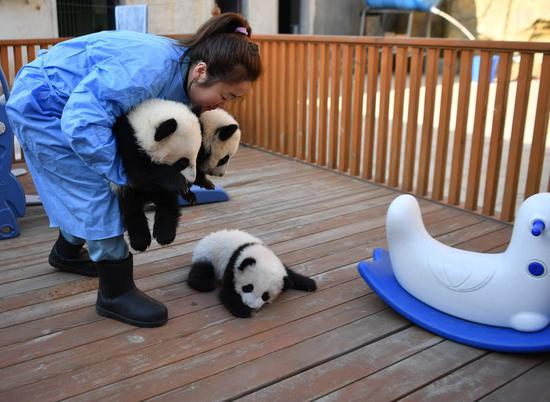 A day of panda keeper