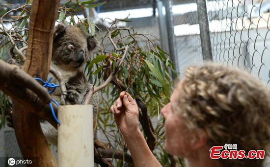 'Five-star hotel' for rescued koalas in Australia
