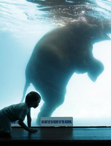 Elephant swims in pool at Thailand zoo