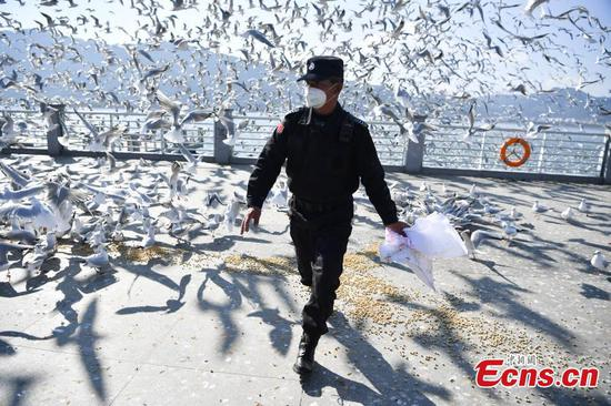 Staff arranged to feed black-headed gulls in Kunming