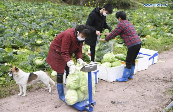 Yunyang County makes effort to increase vegetable supply, keep prices stable