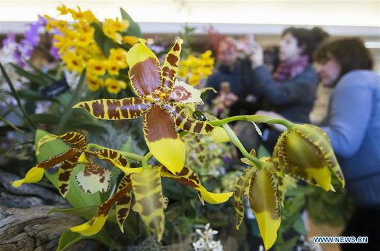 Orchid show held at Toronto Botanical Garden