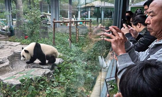 Visitors take photos of giant panda Mengbao at its new home at the Beijing Zoo in Beijing, capital of China, Oct. 13, 2019. (Xinhua/Li Xin)