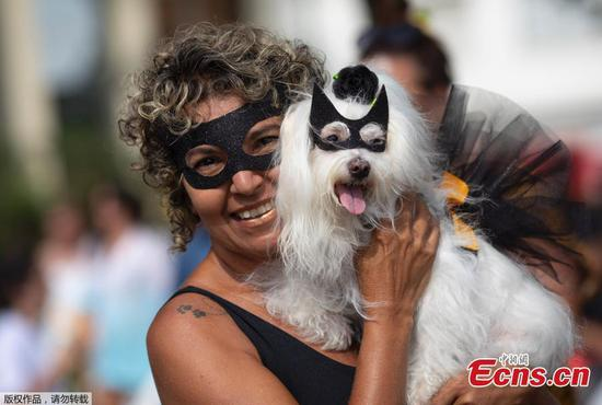 这是狗的一天,因为巴西正准备狂欢
