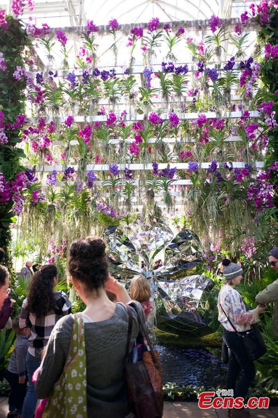 Orchid Show Transforms Galleries At New York Botanical Garden Like