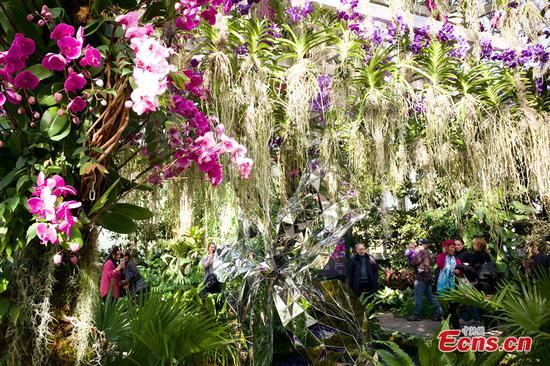 Orchid show transforms galleries at New York Botanical Garden like kaleidoscope