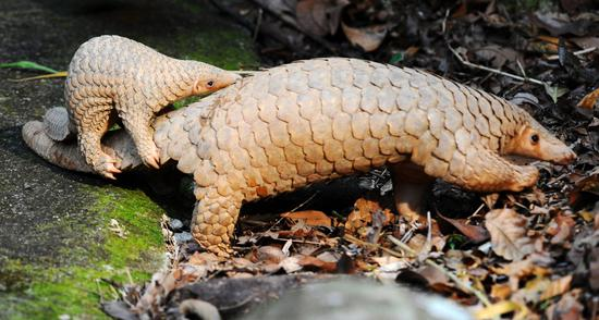 China's legislature adopts decision on banning illegal trade, consumption of wildlife