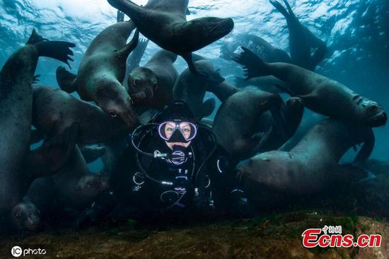 Sea lions photobomb diver's selfie in once-in-a-lifetime moment
