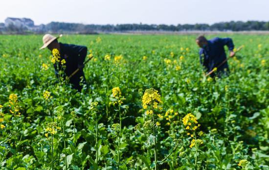Xi emphasizes full effort on food security
