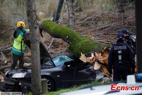 Falling tree crushes car and kills driver near Eiffel Tower