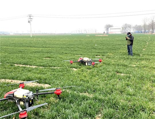 Several drones are used to spray pesticides on wheat fields in Gaocun town, Xingyang city, Central China's Henan province on Friday. (Photo provided to chinadaily.com.cn)