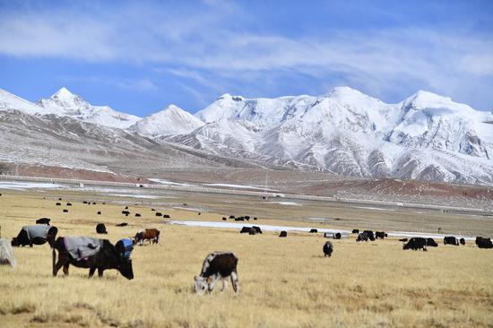 当雄,中国西藏初春的雪世界