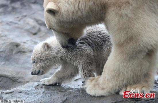 In pics: Cute polar bear baby at zoo in Austria