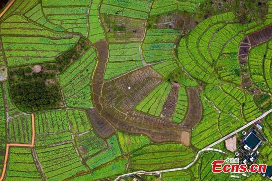 A colorful palette of spring fields in Guangxi