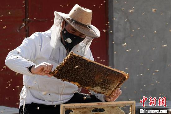 Beekeeping all the buzz in Xinjiang