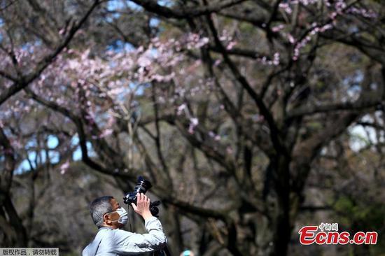 人们在东京赏樱花