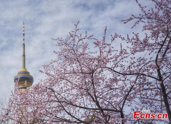 Enjoy spring sunshine and flowers in Yuyuantan Park