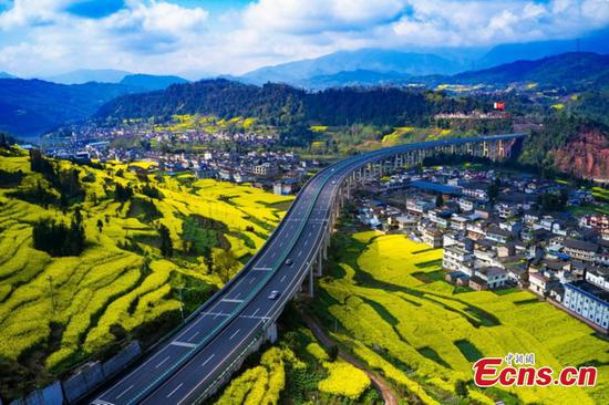 Rape flowers in full bloom in SW China