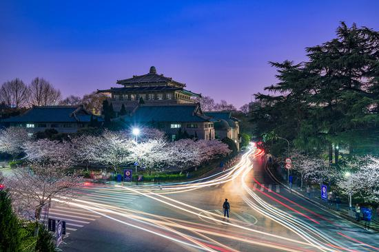 Wuhan University invites people to enjoy cherry blossoms online