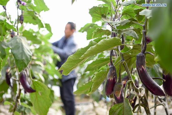 Farming work resumed in orderly manner in Shache, Xinjiang
