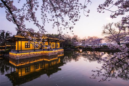 Yuantouzhu offers cherry blossom night scenes for 3 days