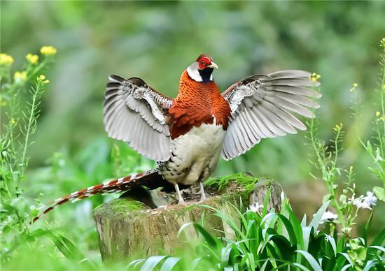 福建农村发现美丽的鸟儿