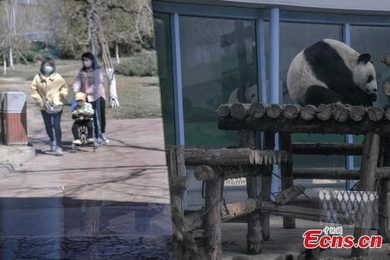 动物园在天津重新开放