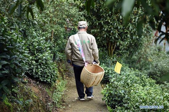 茶叶产业帮助安徽省抚溪市摆脱贫困