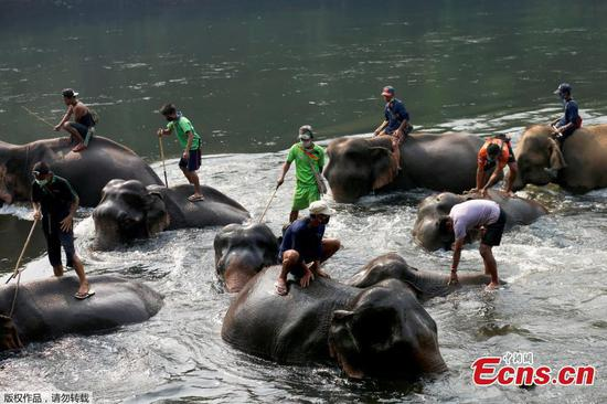 Leisure time at Kanchanaburi elephant camp amid pandemic