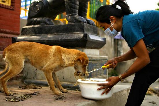Nepali animal welfare organization helps street dogs amid COVID-19 lockdown