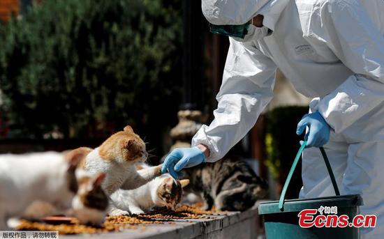 Stray cats taken good care of even amid coronavirus outbreak