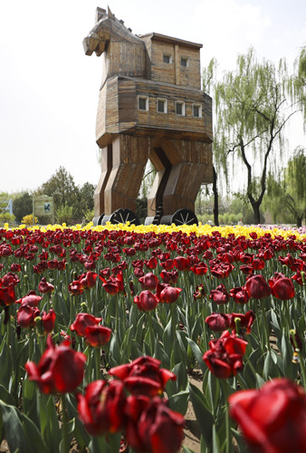 Tulips bloom in Beijing World Park