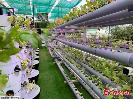 高科技的垂直农场,在阿拉伯联合酋长国沙迦的视图