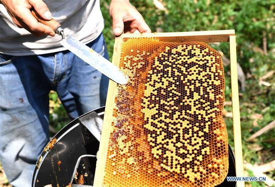 Beekeeping project helps alleviate poverty in S China's Baini Village