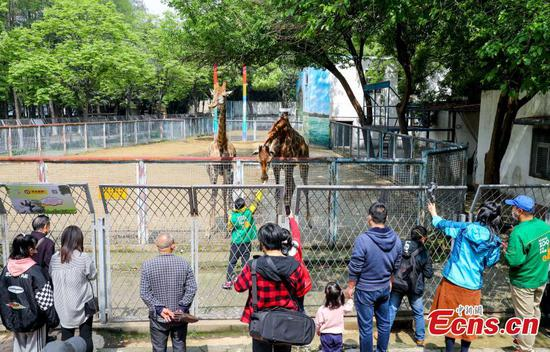 Wuhan Zoo reopens after three months' operation halt