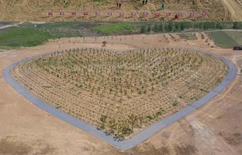 医疗救助队种植心形小树林