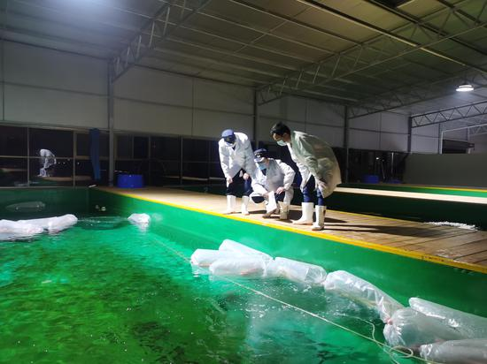 Koi fish imported from Japan to face quarantine