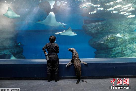 Seal strolls through the empty aquarium in Tokyo