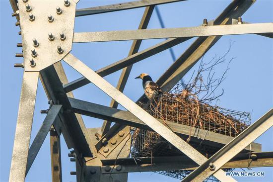 海南鸟类与电缆和谐共存