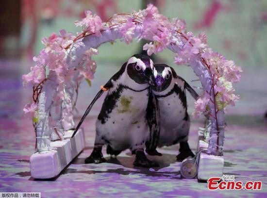 水族馆发布企鹅视频,为人们留下美好的印象