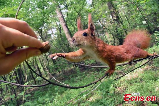 Photographer captures squirrel reaching out for nut from people