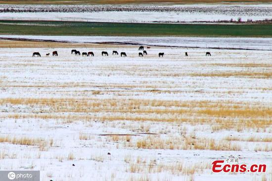 Early summer snowscape in Xinjiang