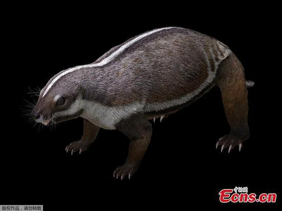 Madagascar's prehistoric beast sheds light on mammalian evolution