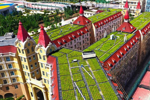 In pics: Rooftop gardens set up at school in Zhengzhou