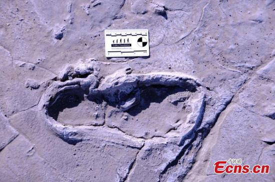 Fossilized human footprints found in Africa could reveal ancient traditions